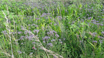 Blühstreifen vor dem Stand