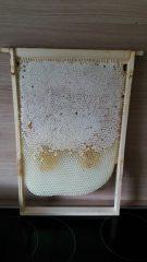 Die erste Honigernte