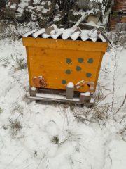 Winterbehandlung mit Oxalsäure im Schnee