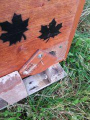 Winterschutz gegen Mäuse in der Einraumbeute